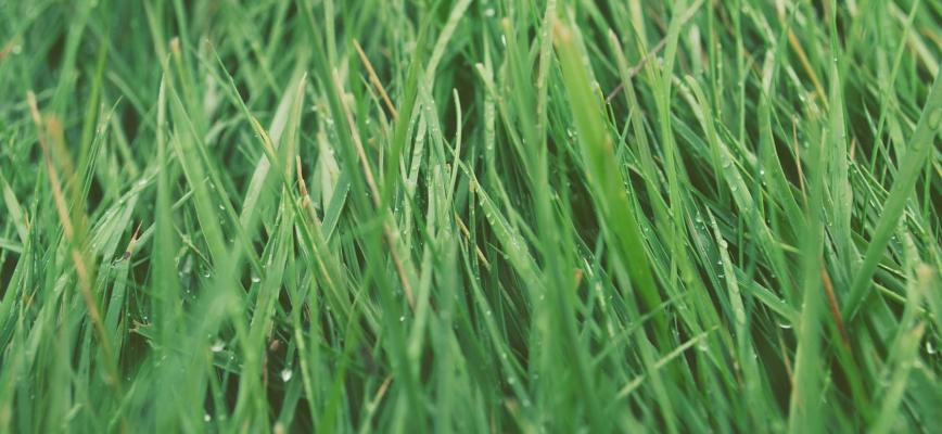 ¿Está dispuesto el consumidor a comprar productos más ecológicos?