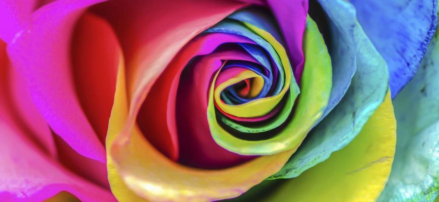El color y la identidad de marca