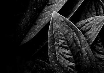 Caso Loewe  Arte, fotografía y naturaleza: simbiosis perfecta en la nueva image...